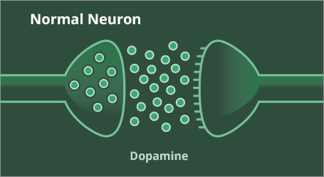 Dopamine levels in a normal neuron